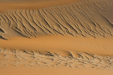 Ripples caused by wind on sand dune, Africa  -  Theo Allofs