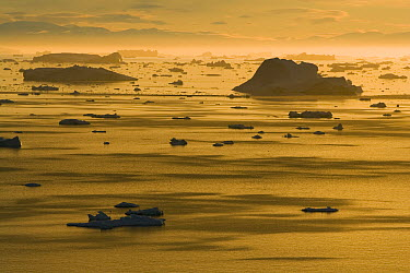 Many icebergs drifting in the Arctic at midnight, end of June, mid summer night, Disko Bay, Greenland  -  Theo Allofs
