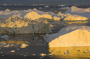 Large icebergs at midnight, end of June, mid-summer night, Greenland  -  Theo Allofs