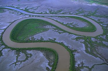 Aerial view of river winding through mudflats, Kimberley Coast, Australia  -  Theo Allofs