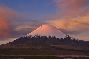 Parinacota Volcano at sunset as seen from Lago Chungara, Lauca National Park, Chile  -  Theo Allofs