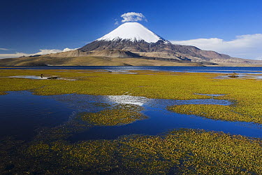 Lake Chungara with Parinacota Volcano, Lauca National Park, Chile  -  Theo Allofs
