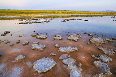 Salt lake Salar de Atacama, the largest salt lake in Chile  -  Theo Allofs