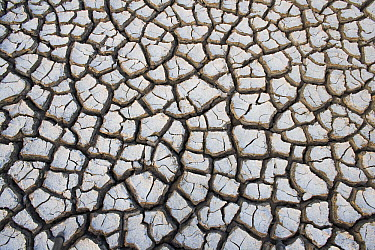 Drought pattern in mud flat, India  -  Theo Allofs