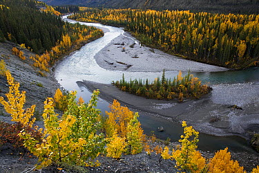 Lapie River winding through boreal forest in autumn, Canada  -  Theo Allofs