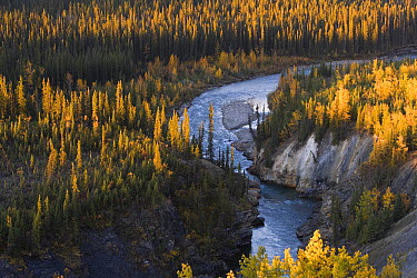 Lapie River winding through forest in autumn, Canada  -  Theo Allofs