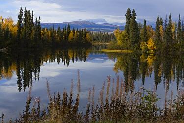 Dragon Lake and boreal forest in autumn, Yukon Territory, Canada  -  Theo Allofs