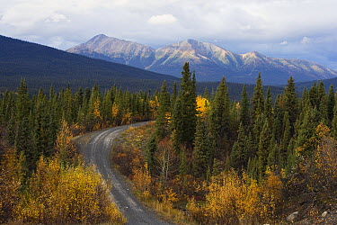 Autumn colors along the North Canol Road, Yukon Territory, Canada  -  Theo Allofs