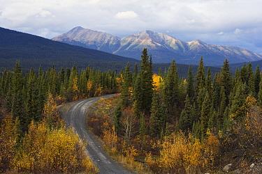 Autumn colors along the North Canol Road, Yukon Territory, Canada  -  Theo Allofs