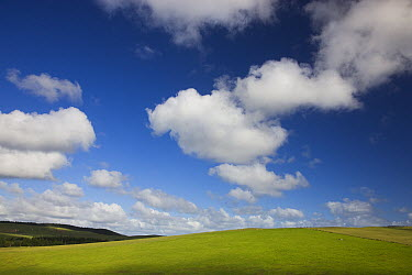 Pastures under blue sky with cumulus clouds, New Zealand  -  Theo Allofs