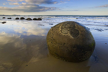 Moeraki Boulders, an example of septarian concretions, Koekohe Beach, New Zealand  -  Theo Allofs