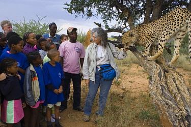Cheetah (Acinonyx jubatus) named Chewbaaka met by students at the Cheetah Conservation Fund with Laurie Marker, Kenya  -  Suzi Eszterhas