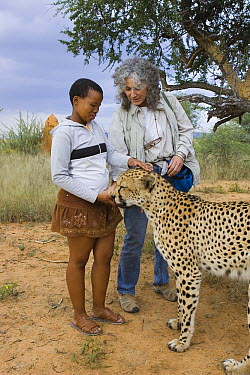 Cheetah (Acinonyx jubatus) named Chewbacca introduced by Dr. Laurie Marker to Namibian school child during an education program, Cheetah Conservation Fund, Namibia  -  Suzi Eszterhas