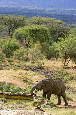 African Elephant (Loxodonta africana) drinking at well created for wildlife by Sarara Camp and Namunyak Wildlife Conservancy, Kenya  -  Suzi Eszterhas