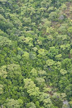 Juniper (Juniperus sp) forest, Matthews Range, Namunyak Wildlife Conservancy, Kenya  -  Suzi Eszterhas