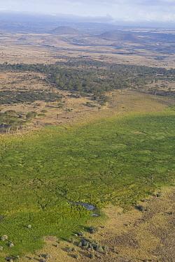 Lewa Swamp amid dry landscape, Lewa Wildlife Conservancy, Kenya  -  Suzi Eszterhas