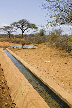 Wildlife waterhole built by Kalama Wildlife Conservancy, Kenya  -  Suzi Eszterhas
