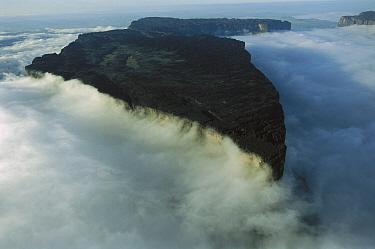 Roraima Tepui, Canaima National Park, Venezuela  -  Thomas Marent