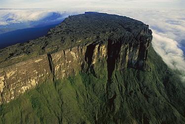 Kukenan Tepui, Canaima National Park, Venezuela  -  Thomas Marent