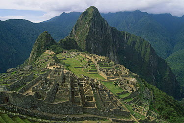 Ruins of Machu Picchu, 9000 feet up in tropical rainforest, Peru  -  Thomas Marent