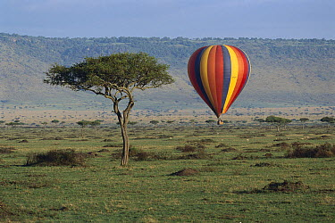 Hot air balloon flying over Masai Mara National Reserve, Kenya  -  Thomas Marent
