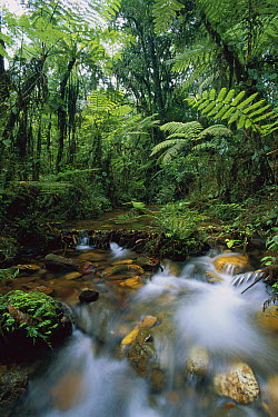 Creek running through montane rainforest, Bwindi Impenetrable National Park, Uganda  -  Thomas Marent