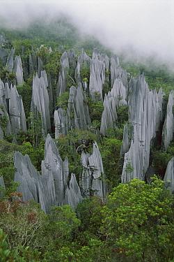 Limestone pinnacles, Gunung Mulu National Park, Sarawak, Malaysia  -  Thomas Marent