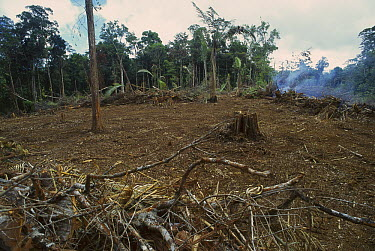 Rainforest deforestation, French Guiana  -  Thomas Marent