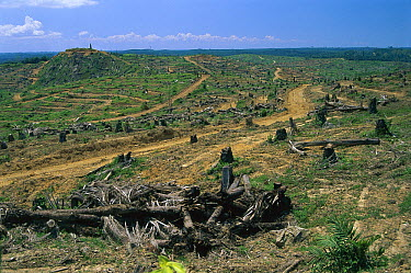 Rainforest deforestation for oil palm plantation, Sabah, Borneo, Malaysia  -  Thomas Marent