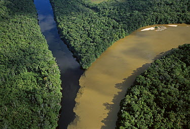 Blackwater river and silted river merging, Canaima National Park, Venezuela  -  Thomas Marent