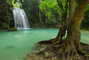 Seven Step Waterfall in monsoon forest, Erawan National Park, Thailand  -  Thomas Marent