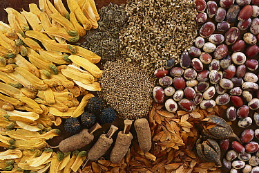 Various seeds, Cerrado Ecosystem, Goias State, Brazil  -  Luciano Candisani