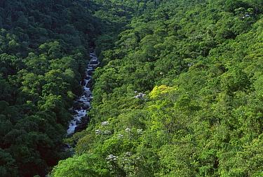 River and Atlantic Forest, Itatiaia National Park, Rio De Janeiro, Brazil  -  Luciano Candisani