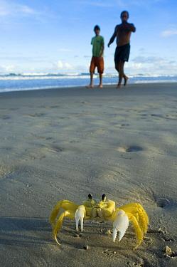 Ghost Crab (Ocypode quadrata) and tourists on beach, Urucuca, Bahia, Brazil  -  Luciano Candisani