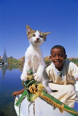 Domestic Cat (Felis catus) kitten and boy on a boat, Aswan, Egypt  -  Mitsuaki Iwago