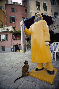Domestic Cat (Felis catus) adult stray looking up at a statue of a man holding a fish outside of a restaurant, Europe  -  Mitsuaki Iwago