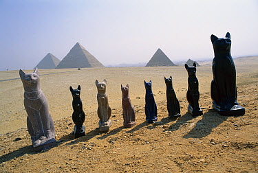 Domestic Cat (Felis catus) statues lined up in the desert with Egyptian pyramids in the background, Egypt  -  Mitsuaki Iwago