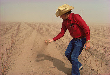 Cotton farmer with handful of dust in front of drought-stricken crops, west Texas  -  Jim Brandenburg