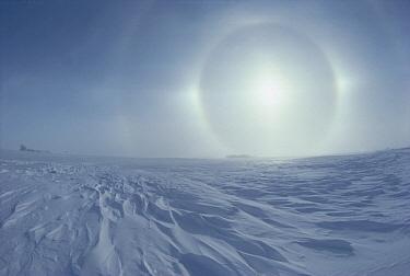 Sundogs, also known as mock sun, on the horizon above a snow field, Minnesota  -  Jim Brandenburg