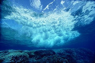 Breaking wave, Solomon Islands  -  Chris Newbert