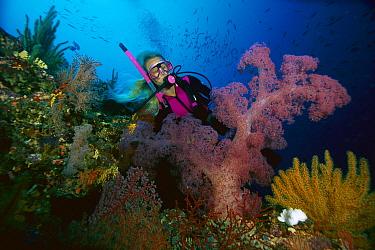 Soft Coral (Dendronephthya sp) and diver, 80 feet deep, Solomon Islands  -  Chris Newbert