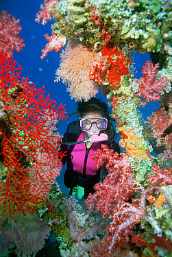 Scuba diver among colorful corals  -  Norbert Wu