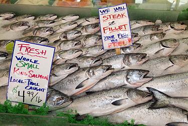 Chinook Salmon (Oncorhynchus tshawytscha) in a fishmarket, Alaska  -  Flip  Nicklin