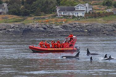 Orca (Orcinus orca) whale watching, southeast Alaska  -  Flip  Nicklin