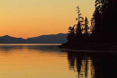 Calm bay at sunset surrounded by boreal forest, southeast Alaska  -  Flip  Nicklin