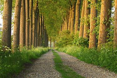 Road on dike, Zuid Beveland, Zeeland, Netherlands  -  Jan Vink/ NiS