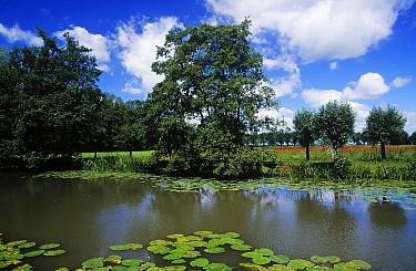 Waterlilies and landscape around canal, Zuid-Holland, Netherlands  -  Frits van Daalen/ NiS