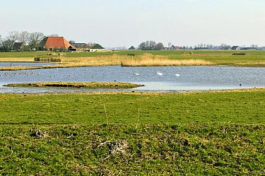 Landscape seen from birdwatching hut, Friesland, Netherlands  -  Philip Friskorn/ NiS