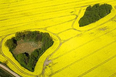 Oil Seed Rape (Brassica napus) aerial view of a field flowering, Bad Doberan, Mecklenburg-Vorpommerm, Germany  -  Willi Rolfes/ NIS