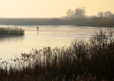 Ice skater in fog, Friesland, Netherlands  -  Jasper Doest